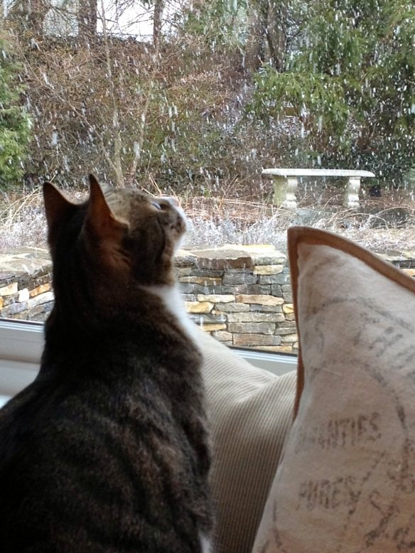 cat watching snow