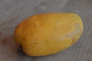 ataulfo mango